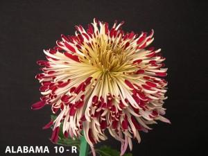 Alabama 10-R